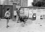 Catholic Pilgrims in Belgium, 1960