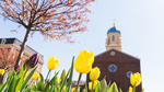 Background Image: Immaculate Conception Chapel with Tulips in Foreground by University of Dayton