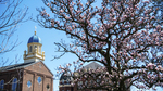 Background Image: Immaculate Conception Chapel with Northern Magnolia in Bloom by University of Dayton