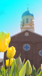 Mobile Device Background: Chapel with Tulips in Foreground