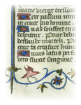 Illuminations from Rare Books: Bird by University of Dayton. University Archives and Special Collections