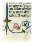 Illuminations from Rare Books: Butterfly by University of Dayton. University Archives and Special Collections