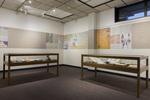 Exhibit Display Cases