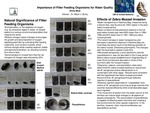 Research exercise: Importance of Filter Feeding Organisms for Water Quality