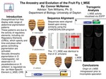 Research exercise: The Ancestry and Evolution of the Fruit Fly t_MSE Cis-Regulatory Element
