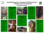 Internship Experience Through the Wild Encounters Program of the Cincinnati Zoo by Sarah Michelle Lesiecki