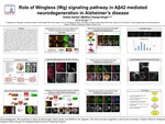 Role of Wingless (Wg) signaling pathway in Aβ42 mediated neurodegeneration in Alzheimer's disease by Ankita Sarkar