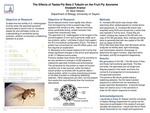 The Effects of Tsetse Fly Beta 2 Tubulin on the Fruit Fly Axoneme
