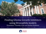 Finding Glioma Growth Inhibitors Using Drosophila Models