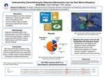 Understanding Chemolithotrophic Reduction Mechanisms from the Dark Marine Biosphere
