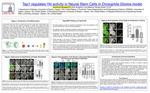 Tep1 Regulates Yki Activity in Neural Stem Cells in Drosophila Glioma Model
