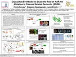 Drosophila Eye Model to Study the Role of NAT 9 in Alzheimer's Disease-Related Dementia (ADRD)